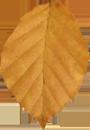 Padající list 0