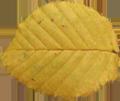 Padající list 2